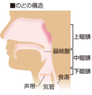 うつる 上 咽頭 炎